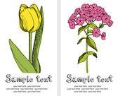 Tarjeta de tulipanes y phlox — Vector de stock