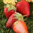 Strawberries - Stock Photo