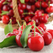 Heap of cherries and leaf — Stock Photo #10679419