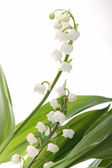 Flower, muguet — Stock Photo