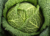 Close up on green cabbage — Stock Photo