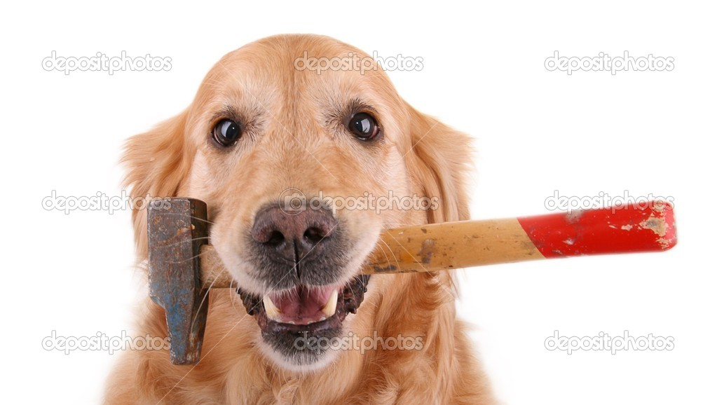 Dog with hammer on white background — Stock Photo #9174253