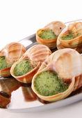 Isolated bourgogne snail — Stock Photo