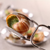 Spoon with bourgogne snail — Stock Photo