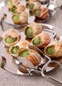 Bourgogne snail — Stock Photo