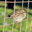 Little bird sitting on the wire — Stock Photo