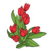 Vector red tulips — Stock Vector