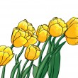 Vector yellow tulips — Stock Vector