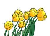 Vector de tulipanes amarillos — Vector de stock