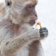 Monkey — Stock Photo #8047769