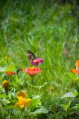 Butterfly on flower — Foto de Stock