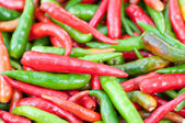 Group of Chilli — Stock Photo
