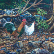 Jungle fowl in forest — Stockfoto #9729199