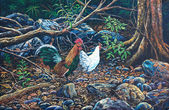 Jungle fowl in the forest — Stock Photo