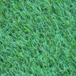 Green grass — Stock Photo #9632898