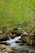 Lesní pramen — Stock fotografie
