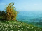 Spring flowers on the background of the lake — Stock Photo