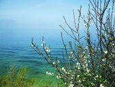 春季开花的树 — 图库照片