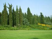 在公园的绿色草坪 — 图库照片