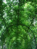 Arco verde — Foto de Stock