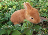 Cute rabbit eats grass — Stock Photo