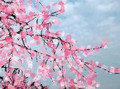 Blossom branch — Stock Photo