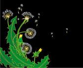 Beautiful dandelions — Stock Vector