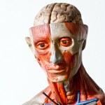 Grunge human anatomy — Stock Photo #9135391
