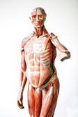 Grunge human anatomy — Stock Photo
