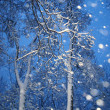 Snowfall with trees — Stock Photo
