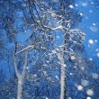 Foto Stock: Snowfall with trees