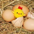 Stock Photo: Chick hatching from egg
