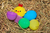 Toy chick and eggs — Stockfoto