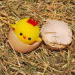 Stock Photo: Toy chick hatching