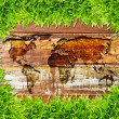 Green grass and world map on wood texture — Stock Photo #8027426
