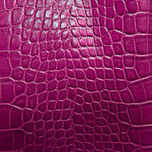 Crocodile skin texture — Stock Photo
