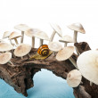 Long stumpy with group of mushroom - Stockfoto