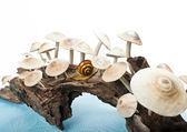 Long stumpy with group of mushroom — Stock Photo
