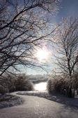 Winter sun. — Stock Photo
