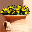 Flowers in amphora - Stock Photo