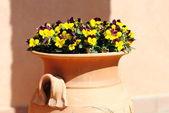 Flowers in amphora — Stock Photo