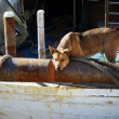 Dog on an old fishing boat — Stock Photo