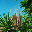 SagradFamilia, Barcelon- Spain — Stock Photo #8640610