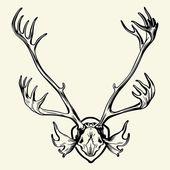 Deer horn — Stock Vector