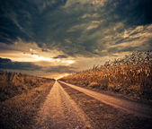 Corn field road — Stock Photo