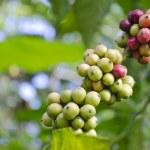 Coffee Beans — Stock Photo #8294620