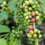 Coffee Beans — Stock Photo #8294804
