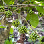 Coffee Beans — Stock Photo #8294845