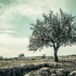 Tree Vintage Style — Stock Photo
