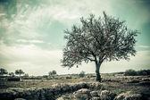 Tree Vintage Style — Stock Photo